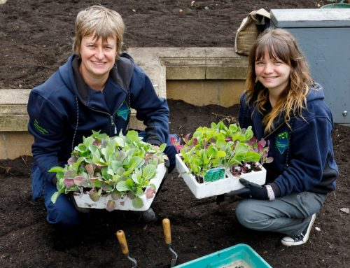 POCKET ALLOTMENTS TO HIT THE HIGH STREET