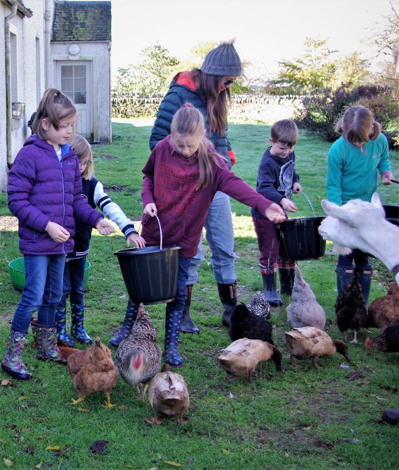 Children get hands on feeding the ducks at Gartur Stitch Farm
