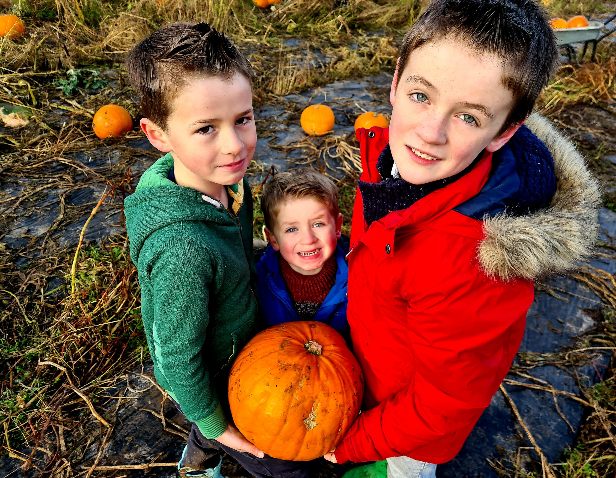 Griffin, Ezra and Jasper Smart at Arnprior Farm Pumpkins